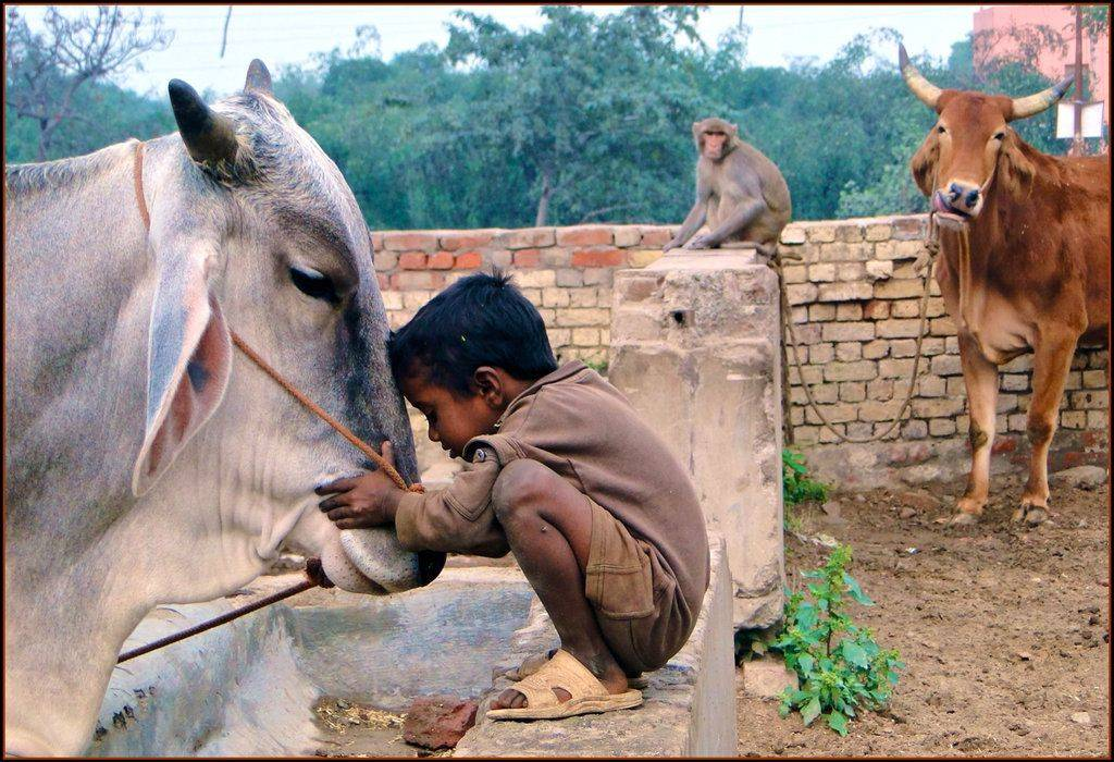 ???? ??? ????? ?? ???? ?? ?? ???? ?? ??? (Animal Rights & Laws In India)